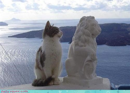 cat,cute,dialog,funny,model,statue