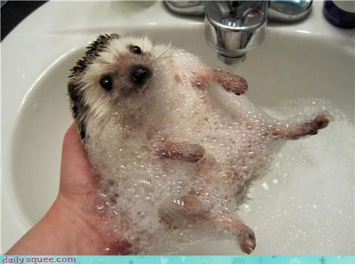 bath cute hedgehog water - 4245999360