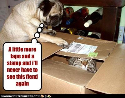 almost there cat excited fiend mail mailing package pug stamp tape