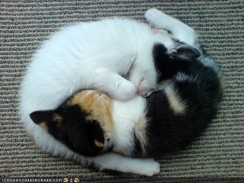 cyoot kitteh of teh day kitten sleeping yin yang