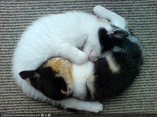cyoot kitteh of teh day kitten sleeping yin yang - 4246725120
