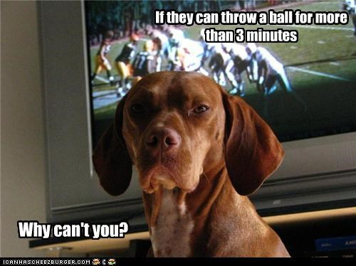 ball disappointed fetch football playing question rhetorical television throwing TV upset whatbreed - 4246802176