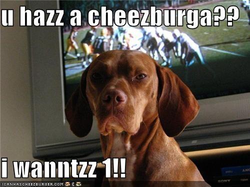 Cheezburger Image 4246971648
