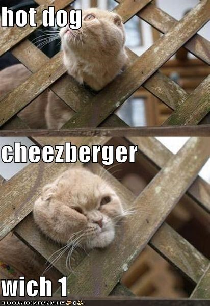 Cheezburger Image 4247119360