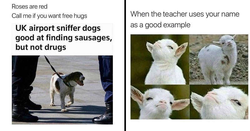 Funny animal memes with dogs, cats, monkeys, squirrels.