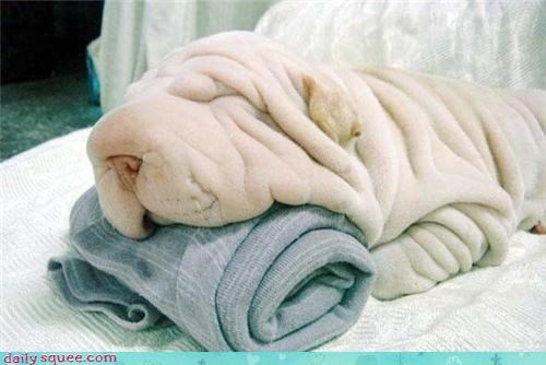 cute dogs puppy towel trufax - 4248313600