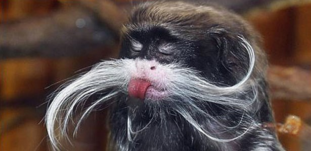funny animals with mustaches