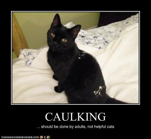 Caulking Cheezburger Funny Memes Funny Pictures