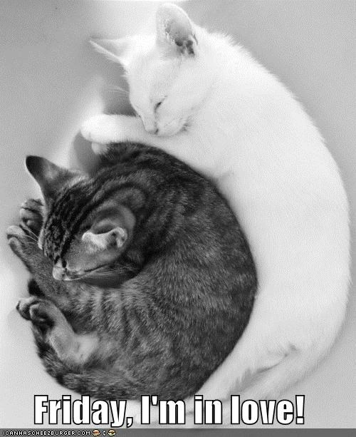 black and white caption captioned friday-im-in-love spooning two cats yin yang - 4248962048
