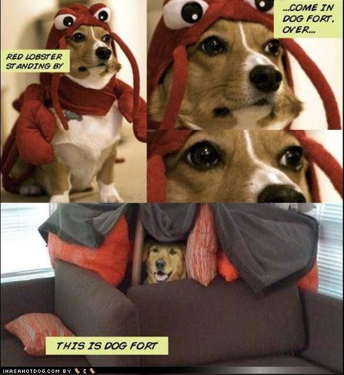comic,comic book,corgi,costume,fort,golden retriever,lobster,suit,superhero,superheroes