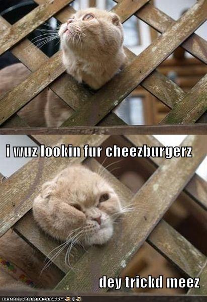 Cheezburger Image 4249201152