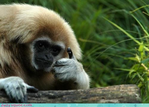 acting like animals bro condescending cool cool story bro monkey sarcasm story thumbs up - 4249544704