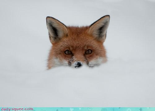 acting like animals children Father fatherhood fox game peekaboo playing scaring snow - 4249546240