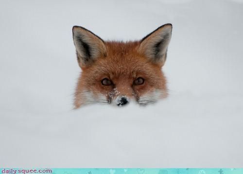 acting like animals children Father fatherhood fox game peekaboo playing scaring snow - 4249546240