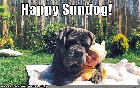 baby bull mastiff bullmastiff cuddling happy happy sundog Sundog - 4249721344