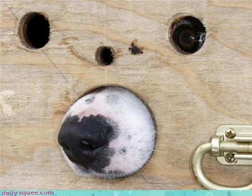 booper,dogs,nose,sniff,spy dog
