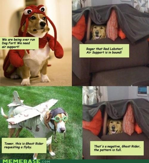 corgi Dog Fort lobster Memes Pillow plane - 4249981696