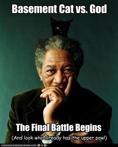actor animals celeb funny lolz meme Morgan Freeman - 4250150144