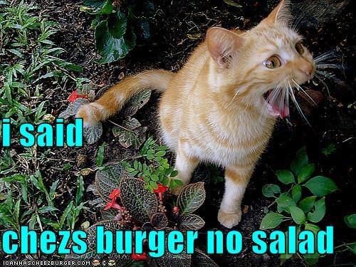 Cheezburger Image 4250431232