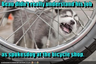 bike,chew,chewing,husky,puppy,spokes,spokesdog,spokesman,spokesperson