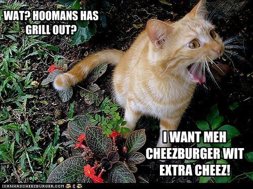 WAT? HOOMANS HAS GRILL OUT? I WANT MEH CHEEZBURGER WIT EXTRA CHEEZ!