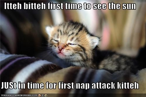caption captioned cat first time itteh bitteh kitteh itteh bitteh kitteh committeh just in time kitten nap nap attack sun - 4250655744