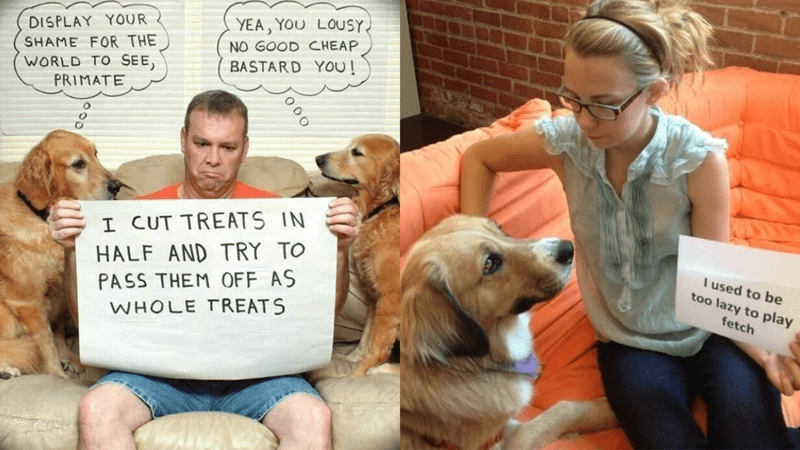 dogs shaming their humans