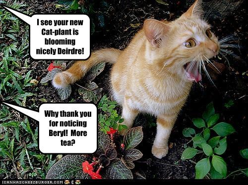 I see your new Cat-plant is blooming nicely Deirdre! Why thank you for noticing Beryl! More tea?