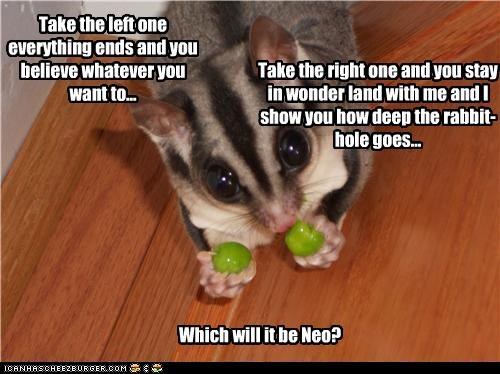 berries blue caption captioned choices decision left neo pill red right sugar glider the matrix - 4251876352