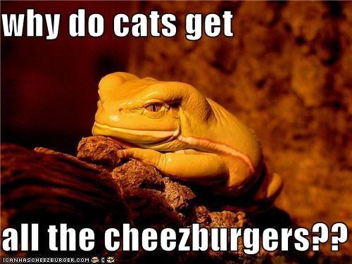 Cheezburger Image 4252235520