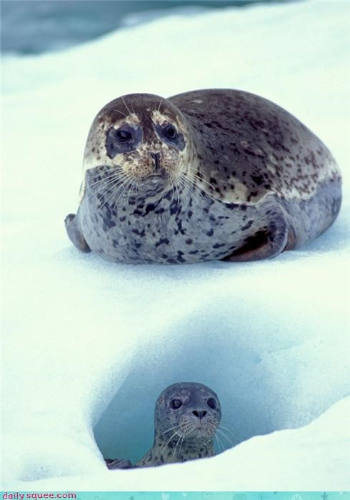 baby snow seal caves mommy ice Buried Treasure squee