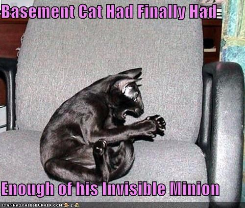 Basement Cat Had Finally Had  Enough of his Invisible Minion
