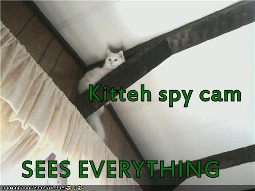 Kitteh spy cam SEES EVERYTHING