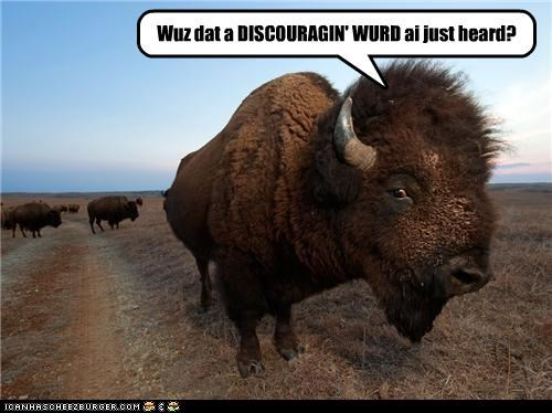 buffalo caption captioned discouraging home on the range interrogating lyrics question upset word - 4253300992