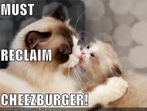 Cheezburger Image 4253655808