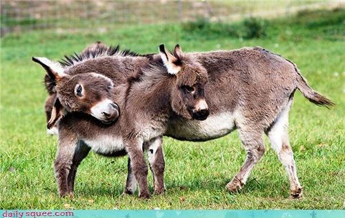 donkeys floofy hooves hug love splort squee - 4253792768