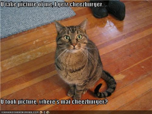 Cheezburger Image 4253861120