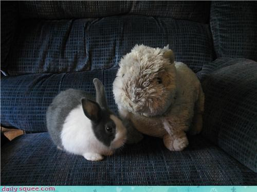 bunny,couch,floof,happy bunday,rabbit,stuffed animal