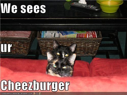 Cheezburger Image 4255109888