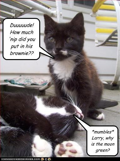 brownie,caption,captioned,cat,catnip,Cats,drugs,dude,kitten,nip,noms,question