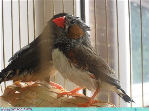 bath bird finch pet reader squee - 4256326912