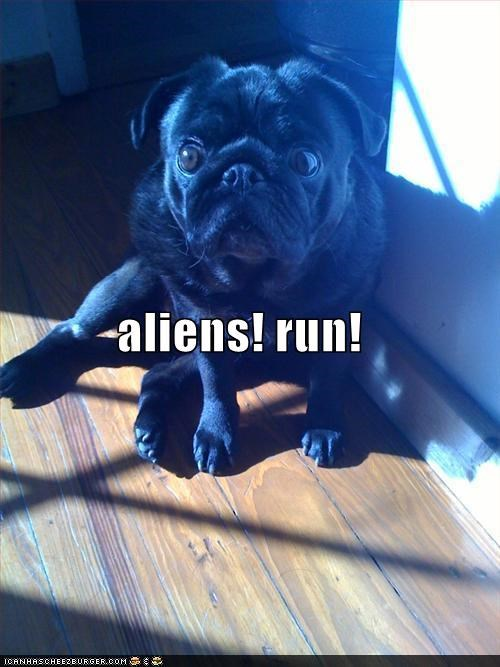 afraid Aliens invasion light pug run scared ufo