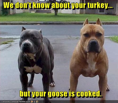 We don't know about your turkey... but your goose is cooked.