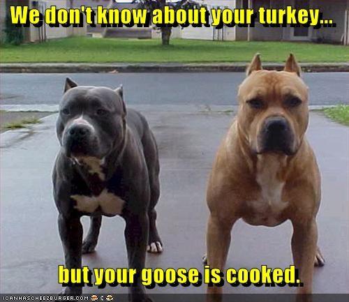 back off bodyguard pit bull pitbull protection - 4257042944