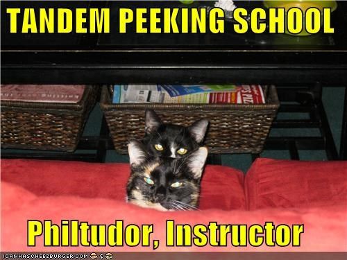 caption captioned cat Cats couch instructor peek peekaboo peeking school tandem - 4257574656