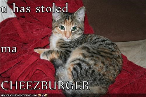 Cheezburger Image 4258591744