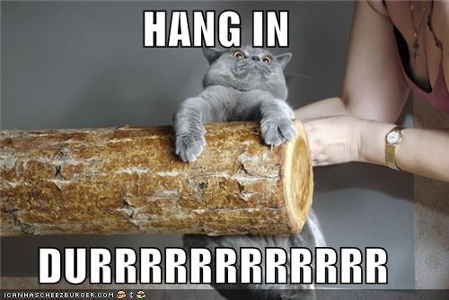 cat,critters,fun bags,hang in there,log,mondays