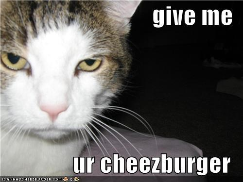 Cheezburger Image 4259037696