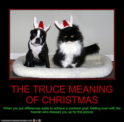 THE TRUCE MEANING OF CHRISTMAS When you put differences aside to achieve a common goal: Getting even with the hoomin who dressed you up for this picture