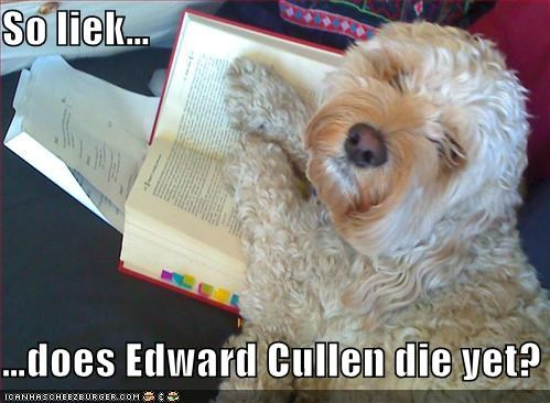 book,bored,edward cullen,exasperated,mixed breed,question,reading,terrier,twilight,unimpressed